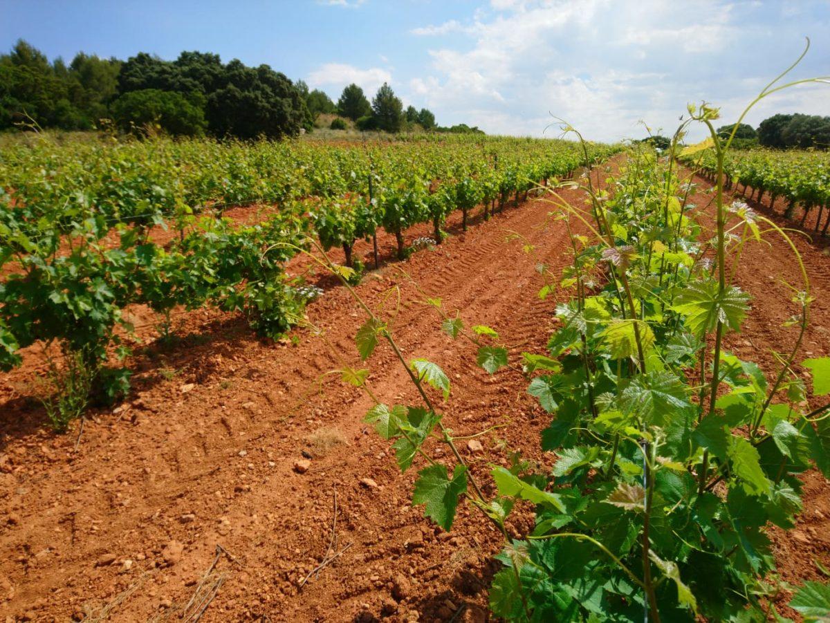 Bodegas y Denominaciones de Origen comparten la decisión del Parlamento Europeo de pedir más apoyo de la Comisión para el sector vitivinícola
